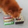 保護犬コスモの成長日記《ペットショップの闇について》