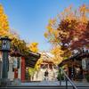 【233】台東区浅草 再訪・待乳山の大根寺