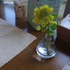 菜の花いろいろ