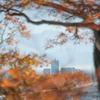 紅葉越しの剱岳:初冬の呉羽山