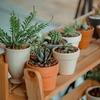 ストレス解消はもちろん、頭痛や乾燥肌も軽減する「観葉植物」のチカラ