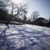 雪の日 新宿御苑