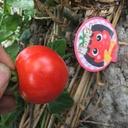 コーヒーと家庭菜園が趣味のサラリーマンのブログ