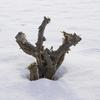 【一日一枚写真】真っ白な雪原の中で【一眼レフ】
