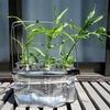 『空芯菜(エンツァイ)』の水耕栽培に再チャレンジ!今度は数回の収穫ができるように頑張ります