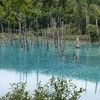 青い池も白ひげの滝も、美瑛パノラマロードをレンタカーでドライブ…