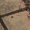 キラキラ光る手賀沼とテントウムシとタンポポ