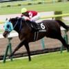 11/30(土)の中山競馬場のレース予想 ~個人的には2Rが勝負レース~