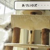 猫雑記 ~暑がりむくの苦悩~