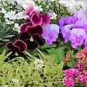 ちっちゃい庭とおっきい空と。
