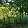 初めて、南足柄市塚原の水源林で、間伐作業した!