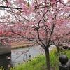 2月 早春河津桜ツーリング 募集開始