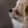【犬猫好き集合】ワンだふるな無料素材サイト