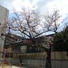 春休みの幼稚園
