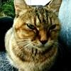 コンビニ横の「野良猫アントニオ」との邂逅と会話【ニャンコ先生】
