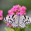 チョウの楽園:ふれあい昆虫館