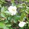 朗報のセクハラ勝訴冬薔薇