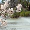 花見の穴場を探しに城北公園へ(SONY サイバーショットDSC-H7)