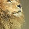 肉食系高学歴ライオン系女経営者による、セックスレス分析。