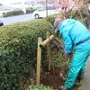 左喜登利会による植樹がおこなわれました