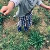 庭のアスパラでフリッター