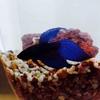 青い宝石ベタと暮らす   水槽の水替え