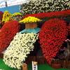 国華園の菊花日本全国大会