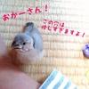 桜文鳥のヒナ、気になるもの。
