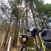 クロスカブで、春を感じる林道を走ってみた