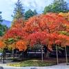 ものすごい楓の紅葉『千如寺』