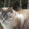 猫集会に集まる猫さんをご紹介します。その2