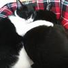 今日の黒猫モモ&白黒猫ナナの動画ー947