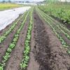 農園日誌ー新たな研修生