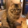 猫の目の炎症について