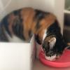 【愛猫日記】毎日アンヌさん#207