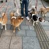やっぱり飼うなら、愛嬌のよい犬を飼いたいな!どういう影響を与えるか、愛情を持って関わろう!