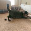 おっとり系の猫がハッスルするときは、巻き込まれ注意。
