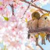 二十四節気 3月21日より春分。おすすめ魔法ハーブはよもぎとホーリーバジル