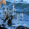 寒い日の琵琶湖名物「しぶき氷」
