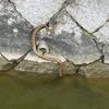【鯉釣りブログ】黄色信号🚥、今年に入って1匹しか釣れていませんΣ(゚Д゚)
