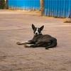 【一日一枚写真】インドの野良犬達 Part.3【一眼レフ】