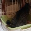 ゴシゴシ厳禁!猫トイレの洗い方。
