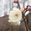 1月5日に早くも開花。