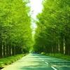 GW連休1日目は森林浴はメタセコイア並木と奥琵琶湖パーク