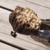 翌日の蜂の巣