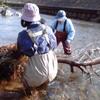 柳瀬川の清掃活動