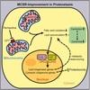 ミトコンドリアUPRが細胞質に伝わる経路とその引き金は何なのか? (Cell 2016年9月8日号掲載論文)