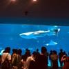 【イルカのショーは大人気!いおワールド かごしま水族館は子連れ家族におすすめお出かけスポット!】