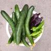 孫とユニクロへ/夏野菜の状況