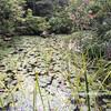 【京都市左京区】家康の遺言による3つの東照宮のうちのひとつ「金地院」。特別名勝「鶴亀の庭園」をお見逃しなく!